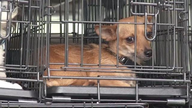 Shelter dogs affected by Hurricane Harvey make their way to Delaware