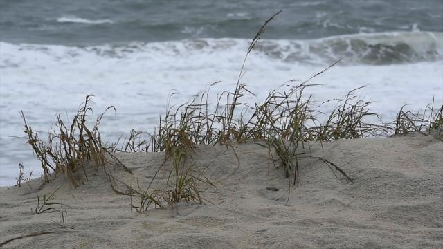 Dune protection a concern for beach mayors