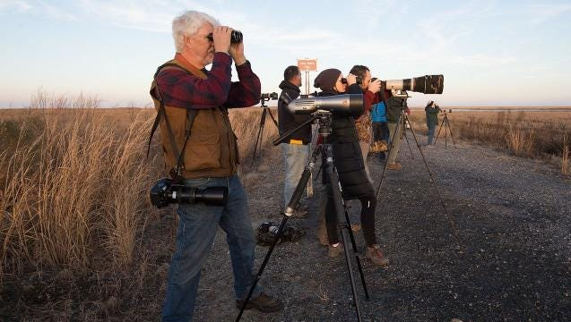 Life's a hoot for birders at Fowler Beach