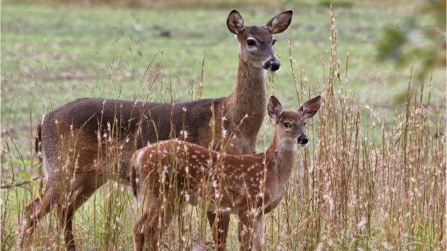 Delaware puts public land to bid in new deer management program