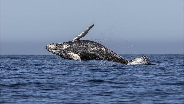 Whales delight Delaware beachgoers