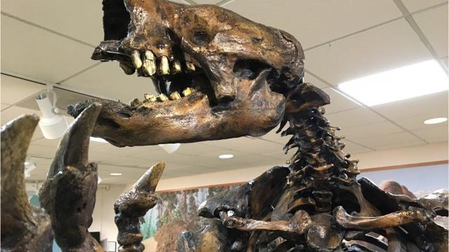 Big Bone Lick State Historic site in Boone County has a new 8-foot-tall sloth skeleton display. Big Bone is the birthplace of paleontology in the Western Hemisphere. Bones of prehistoric mastodons and other extinct beasts have been dug up.