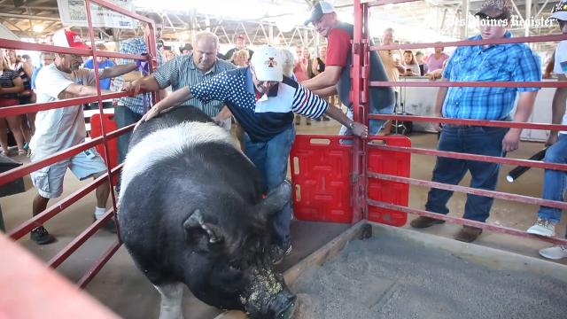 Scenes from Day 1 of the Iowa State Fair