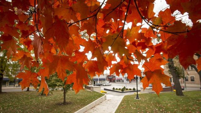 Why iowa leaves are changing to fall colors earlier than for When will the leaves start changing 2017