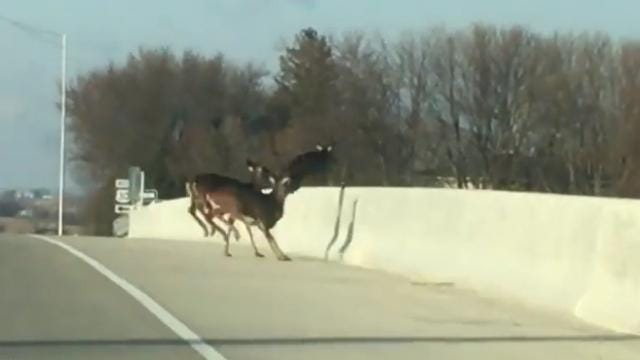 Footage was captured by two motorists who were left shocked at what they witnessed. Warning: Viewer discretion is advised.