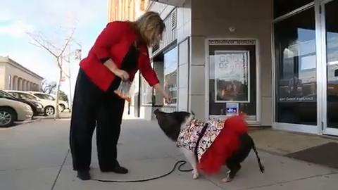 Joy, a 4-year-old mini pig, is a celebrity in Newton, where she is the mascot for the Capitol II Theatre. Joy greets guests and does tricks for them after shows.