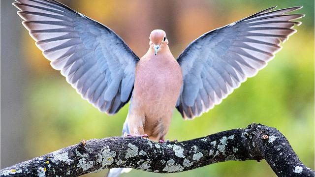 Michigan hunting groups want the state Department of Natural Resources to make mourning doves and sandhill cranes game species eligible for hunting. Some think that's a bad idea.