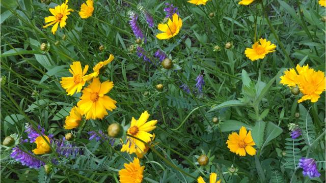 Rain gardens help reduce water pollution, mosquito breeding