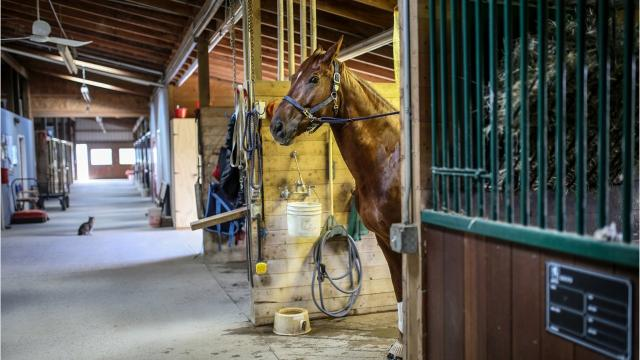 Horse habitat and its luxury estate sit in the 'enchanted forest' of Metamora