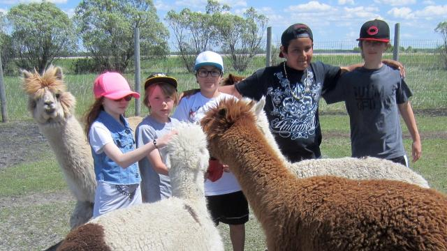 In Canada, the 313 Farms in Anola, Manitoba is offering hip hop dance, pilates and cardio exercise classes — with alpacas.