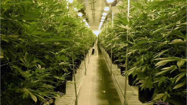 Nearly 300 Michigan towns just say no to marijuana businesses