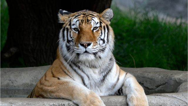 Opened in 1928, the Detroit Zoo has more than 2,000 animals of 240 species. The zoo gets more than 1.6 million visitors annually. Ann Zaniewski / Detroit Free Press