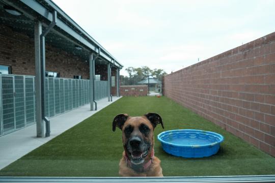 Oakland Control de Animales del Condado se abre de $15,5 millones de refugio para los perros callejeros - Detroit Free Press 1