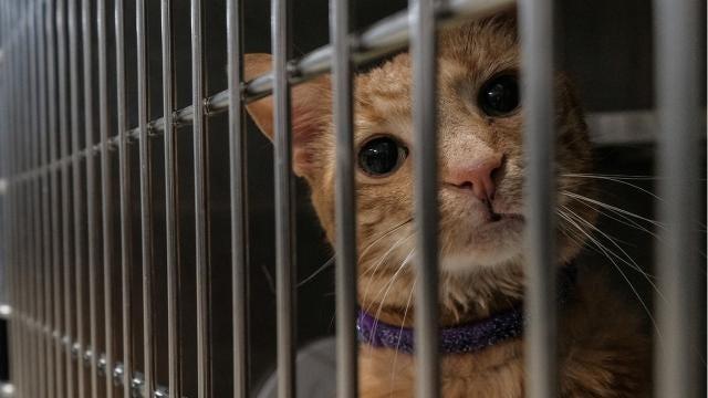 Oakland Control de Animales del Condado se abre de $15,5 millones de refugio para los perros callejeros - Detroit Free Press 3