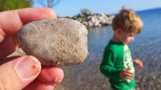 Michigan's state stone is made up of fossilized coral and can be found across the upper Lower Peninsula.