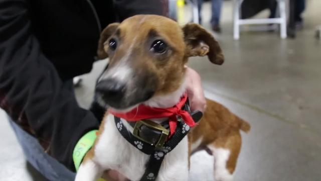 """Grand Rapids-based BISSELL Pet Foundation's """"Empty the Shelters"""" event paid adoption fees for 2,103 new owners of cats, dogs and other animals, setting a new record for the foundation Oct. 14, 2017. Video produced by Brian Manzullo, DFP."""