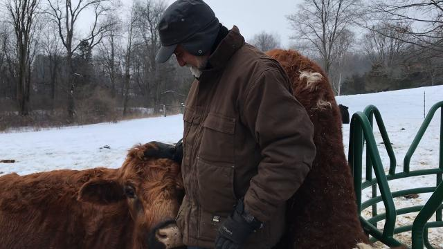 Jefferson the steer, escaped slaughter in 2003 in Eastern Market, finding his way to the streets before he was tranquilized and, eventually, taken to Sasha Farm Sanctuary and Safe Haven for Animals in Manchester. Owner Monte Jackson tells his story.