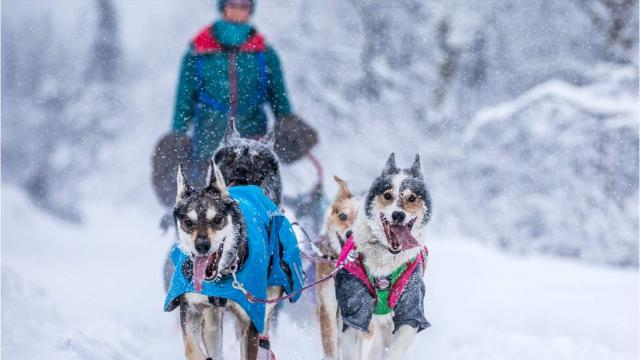 Shaynee Traska, a native of Gladwin, Mich., is competing for the first time in the Iditarod, the grueling dogsled race across the Alaskan wilderness.