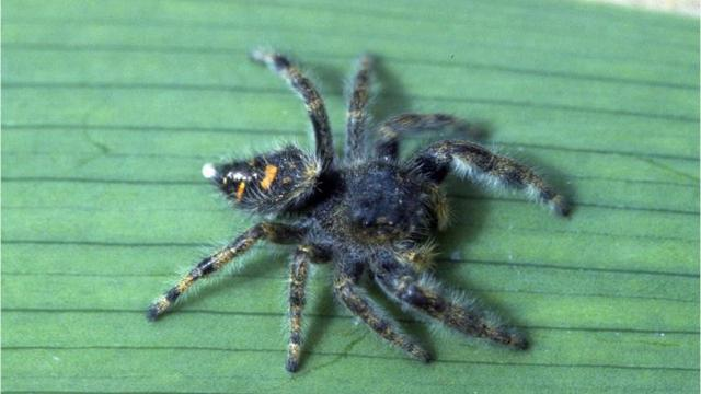 Michigan spiders can be scary — but they (probably) won't kill you