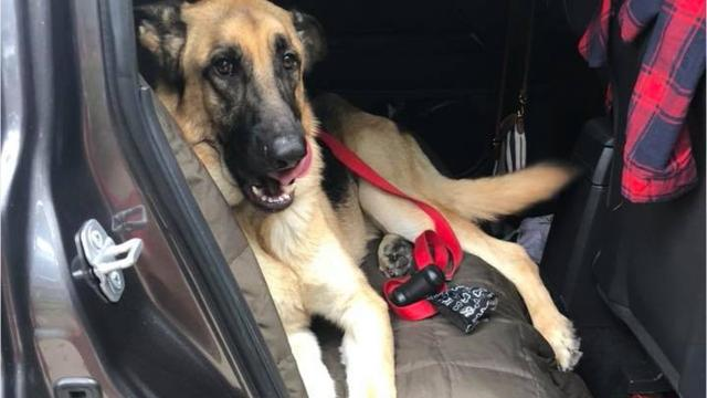 Stephanie Costyk was excited about welcoming a Michigan dog she rescued to her home in Texas.