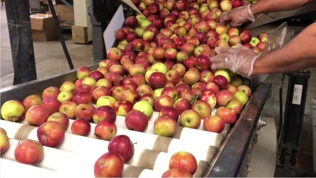 How hard cider is made at Blake's Hard Cider Co. in Armada, in northern Macomb County.