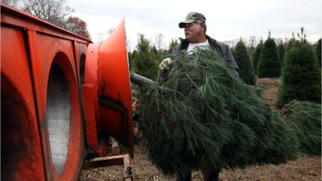 Michigan is a top grower of Christmas trees