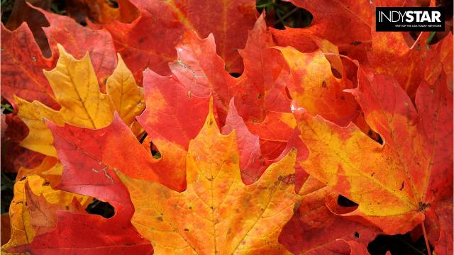 Many folks travel to New England or the Southeast to see fall foliage. But some of the best autumn colors are right here in your own backyard. Just take a look.