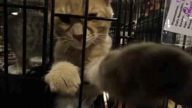 Over 1000 animals came to the Indy Mega Adoption Event at the Indiana State Fairgrounds looking for forever families, Oct. 14-15 from noon to 6pm.