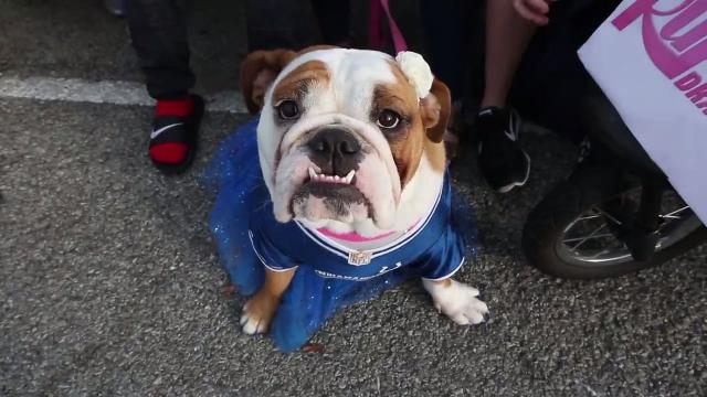 17th annual Butler Bulldog Beauty Contest brings out lots of beauties!