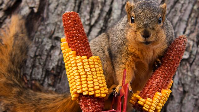 Local squirrel, Baby, is tapped to appear on America's Funniest Home Videos
