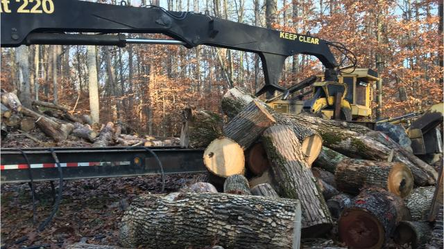 Indiana now has forests on about 20 percent of its land, and some experts say it's time to cull some of those trees to keep forests healthy. However, critics say timber harvesting could cause irreparable damage.