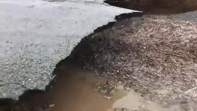 In footage provided by Brittany and Zach Wildman, the force of flooding waters causes a section of road in Union County to completely collapses.