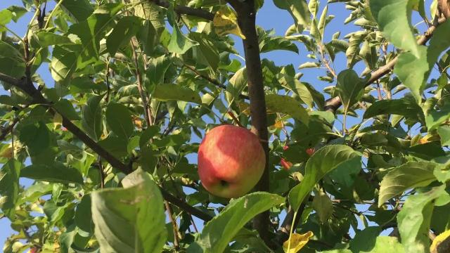Local landmark Wilson's Orchard is a destination for Johnson County residents during the fall season.