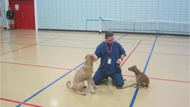 A partnership between the Iowa City Animal Care and Adoption Center and the Iowa Medical and Classification Center prison in Coralville is helping prepare rambunctious dogs for adoption.