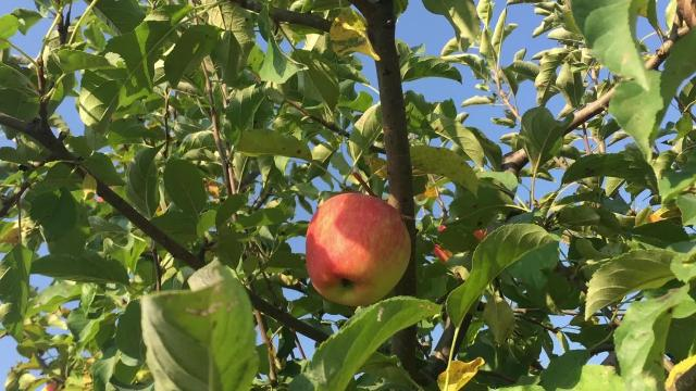 Local landmark Wilson's Orchards is a destination for Johnson County residents during the fall season.