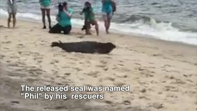 National Aquarium releases Phil the Seal at Sandy Hook
