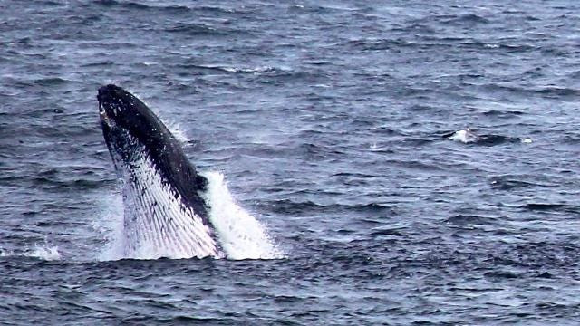 Documentary: Whale watching at the Jersey Shore