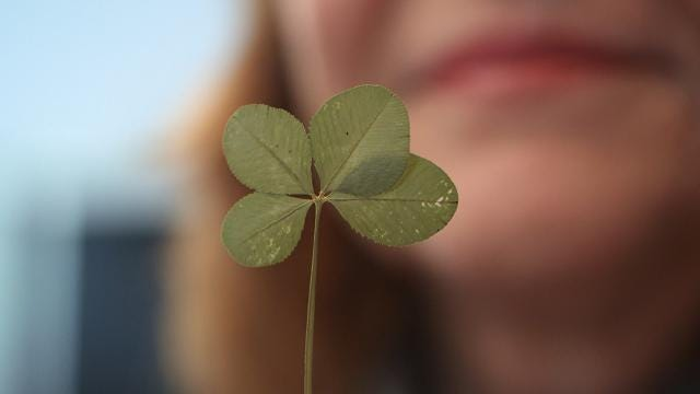 Cathy Doran finds four-leaf clovers by the hundreds. @BJohnstonAPP