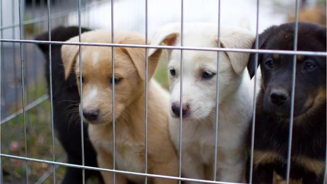 WATCH: Mississippi pups head to N J  to find new homes