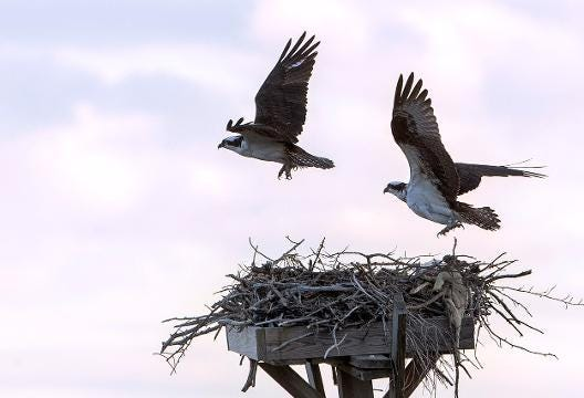 As daytime temperatures rise, wildlife slowly emerge and return to Cattus Island County Park in Toms River, NJ.