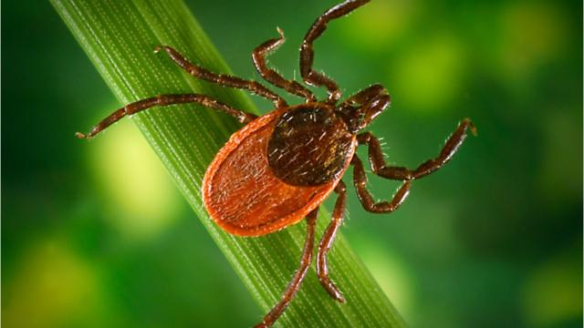 New Jersey is one of the states where Lyme disease is most prevalent. Know the common symptoms if you're infected. By Susanne Cervenka