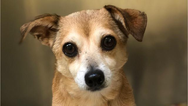 Monmouth County SPCA took in 15 dogs from areas impacted by Hurricane Florence and they need good homes. Photos and video courtesy of Lindsay Sanator, Monmouth County SPCA. Video edited by Susanne Cervenka, Asbury Park Press