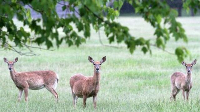 Wildlife officials urge caution on the roads during deer mating season.
