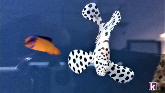 Stingray Bay Fish & Aquarium