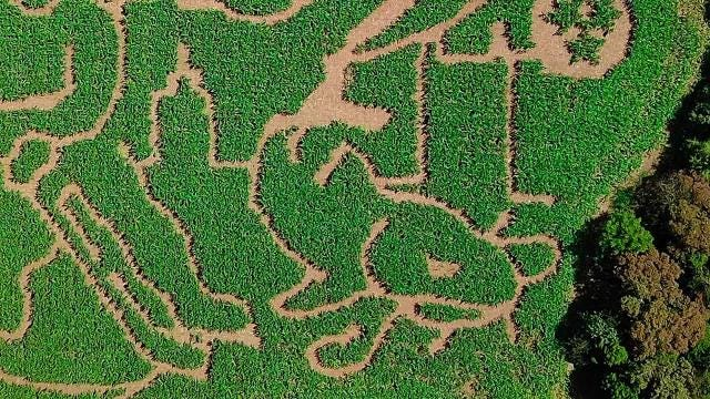 Why create a Predators corn maze