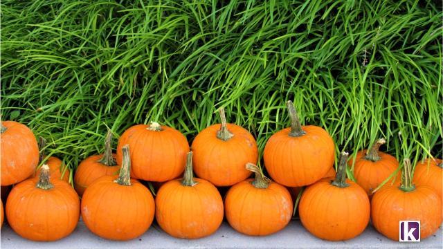 Sabores de otoño: los comerciantes, los agricultores de mercado de la oferta de temporada ... - Knoxville News Sentinel 1