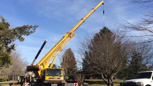 The Christmas Tree for the Tennessee State Capitol Building in Nashville was cut down in Burns Monday morning. The Mazzo family of Burns donated the Norway spruce.