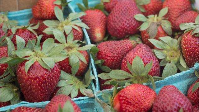 Strawberries have been an important part of Portland, Tennessee's culture since the early 1900s.