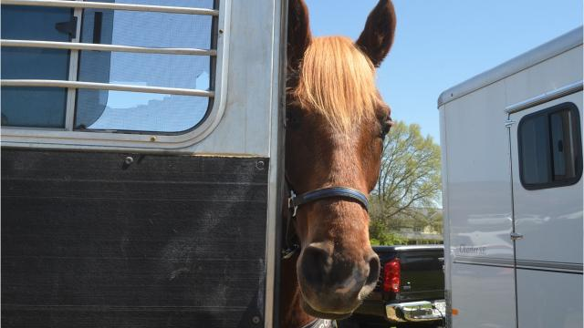 Hendersonville Mounted Police has four horses, who will soon have their own permanent barn.