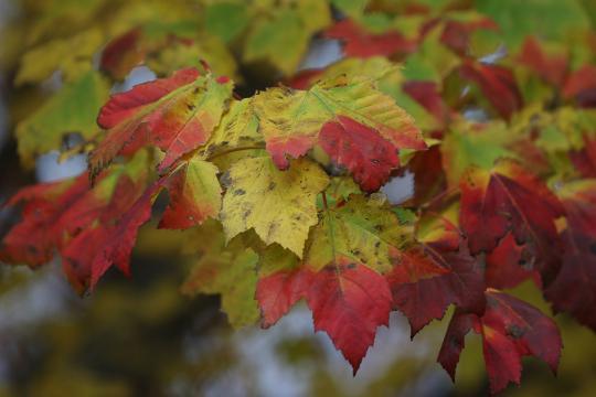 Fall at Ontario Beach Park